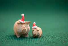 Pigs wearing christmas hat. Two pigs wearing christmas hat stand on green background stock image