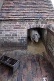 Pigsty Fotografie Stock