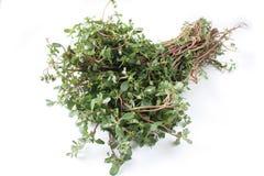 Pigweed, groenten of gezondheid vege Royalty-vrije Stock Afbeeldingen