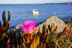 Pigweed am Seeufer stockbild