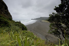 Piha Beach. On the West Coast of the North Island, New Zealand Stock Images