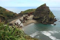 Piha Beach with Taitomo Island. New Zealand royalty free stock images