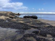 Piha strand, NZ arkivfoto