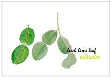 Pijawki wapna liścia akwareli ilustracyjny wektorowy tło Obrazy Stock