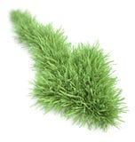 Pijl gevormd flard van gras Royalty-vrije Stock Afbeelding