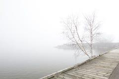 Pijler en witte berkbomen op mistig meer Royalty-vrije Stock Foto's