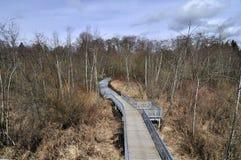 Pijler van bos aan het meer Stock Afbeelding