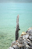 Pijler van zeeschelpen wordt gemaakt die Stock Foto's