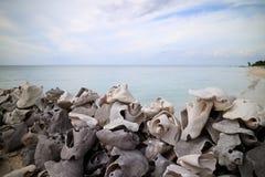 Pijler van zeeschelpen wordt gemaakt die royalty-vrije stock foto's