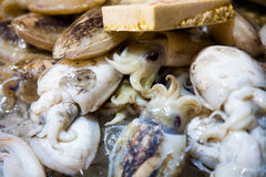 Pijlinktvis in de markt Royalty-vrije Stock Afbeeldingen