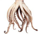 Pijlinktvis gekookte tentakels Royalty-vrije Stock Foto
