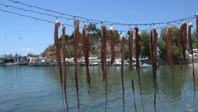 Pijlinktvis het drogen in limenariahaven Thassos Griekenland stock footage