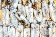 Pijlinktvis/inktvissen Stock Afbeelding