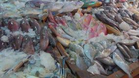 Pijlinktvis, krab, zeekreeft en diverse verscheidenheden van vissen stock videobeelden