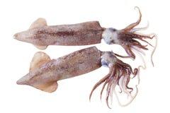Pijlinktvissen Stock Foto's