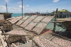 Pijlinktvissen op netto droog bij de zon in Pattaya, Thailand royalty-vrije stock foto's