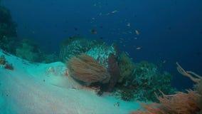 Pijlstaartrog op een koraalrif Stock Afbeelding