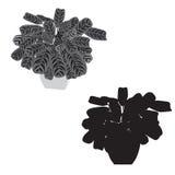 Pijlwortel met bont bladeren in een pot, zwart-witte grays Royalty-vrije Stock Fotografie