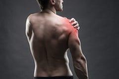 Pijn in de Schouder Spier mannelijk lichaam Het knappe bodybuilder stellen op grijze achtergrond Rustig dicht omhooggaand studios royalty-vrije stock foto