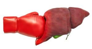 Pijn in lever, het concept van de leverziekte Menselijke lever met het in dozen doen gl stock illustratie