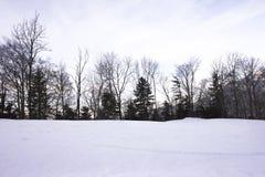 Pijnbomen in de winter Royalty-vrije Stock Foto