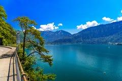 Pijnbomen dichtbij duidelijk transparant azuurblauw Meer Thun, Thunersee, Bern, S royalty-vrije stock afbeelding