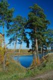 Pijnbomen en rivier Stock Foto's