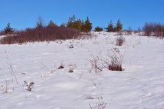 Pijnbomen en struiken op heuvel met sneeuw, op een achtergrond van blauwe zonnige hemel wordt behandeld die stock afbeeldingen