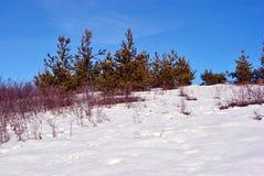 Pijnbomen en struiken op heuvel met sneeuw, op een achtergrond van blauwe zonnige hemel wordt behandeld die royalty-vrije stock afbeelding