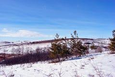 Pijnbomen en struiken op heuvel met sneeuw, op een achtergrond van blauwe zonnige hemel wordt behandeld die royalty-vrije stock foto