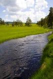 Pijnbomen, gras, water Royalty-vrije Stock Foto's