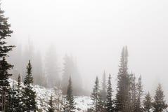 Pijnbomen in mist Royalty-vrije Stock Foto
