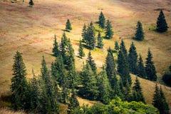 Pijnbomen op bergenweide stock afbeeldingen