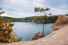 Pijnbomen op de rotsachtige kust van het meer Stock Afbeelding