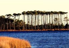 Pijnbomen op Duinmeer Stock Fotografie
