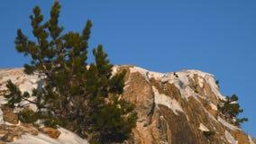 Pijnbomen op snow-capped pieken van de Krimbergen stock footage