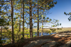 Pijnbomen op zonnige klip Stock Fotografie
