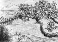Pijnbomen over het overzees - landschap Royalty-vrije Stock Afbeelding