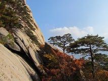 Pijnbomen van het Seoraksan de Nationale Park Stock Foto