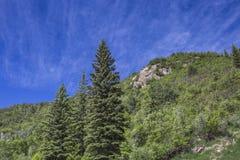Pijnbomenbomen bij Paonia-het Parkberg van de Staat, Colorado Stock Foto