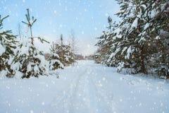 Pijnbomenbomen, met Sneeuw, langs Weg met Dalende Sneeuwvlok worden uitgestrooid die stock afbeelding