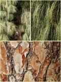 Pijnbomennaalden en schors collage Stock Afbeeldingen
