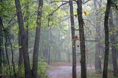 Pijnboom Barrens Sunshower stock afbeelding
