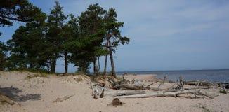 Pijnboom-bomen en overzees royalty-vrije stock foto's