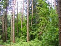 Pijnboom bosplatteland, behoud royalty-vrije stock afbeeldingen