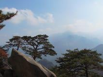 Pijnboom in de bergen Korea Royalty-vrije Stock Fotografie