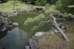 Pijnboom in de tuin van Japan Royalty-vrije Stock Fotografie