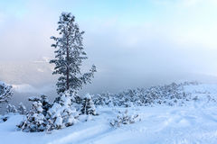 Pijnboom in de winterbergen Royalty-vrije Stock Foto