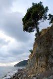 Pijnboom dichtbij overzees 2 Stock Fotografie