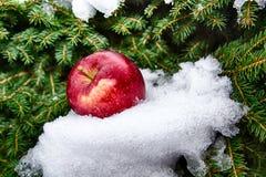Pijnboom en appel Royalty-vrije Stock Afbeeldingen